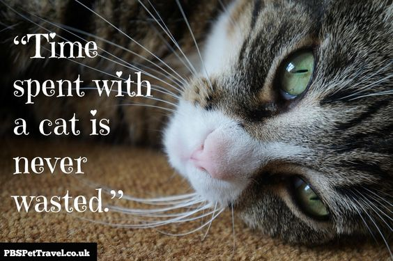 Image result for quotes from the cat