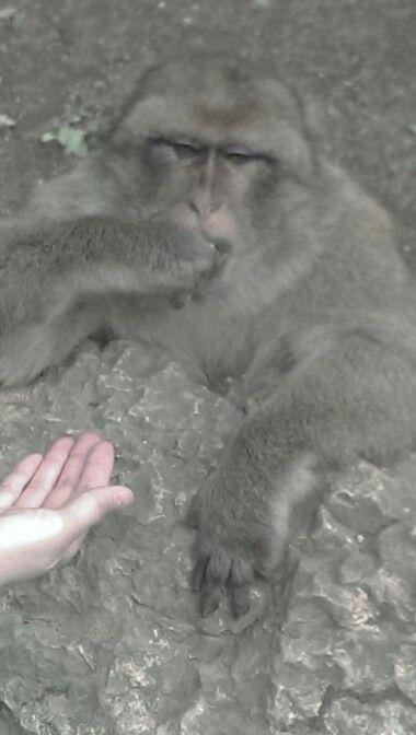 Monkeys in Rocamadour!