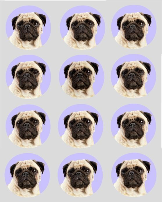 12 Pug Dog Cupcake Toppers Printed Edible Cake Decorations 40mm