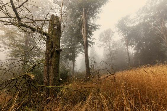 Velling Forest by Martin Worsøe Jensen on 500px
