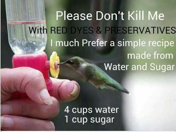 Hummingbird food No dye..just 2 things  4 cups water and 1 cup sugar