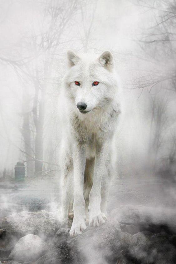 Fantasma Lobo de Jon Snow