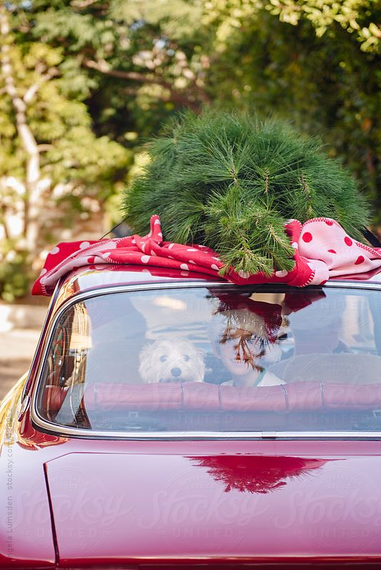Small boy and dog sitting happily in the back of a red car with a christmas tree on the roof by Angela Lumsden for Stocksy United