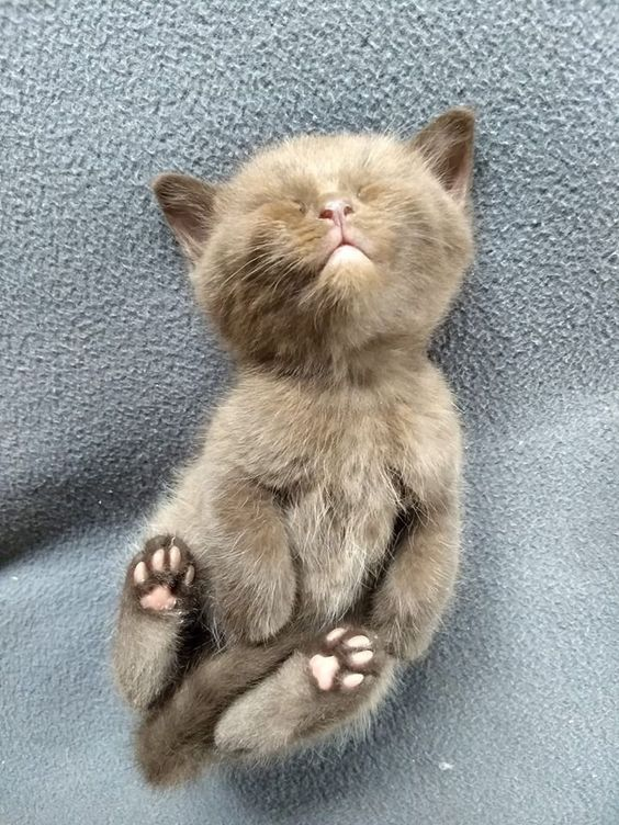 Oh Such Cute Kitty Baby Cats Beautiful Cats Kittens Cutest