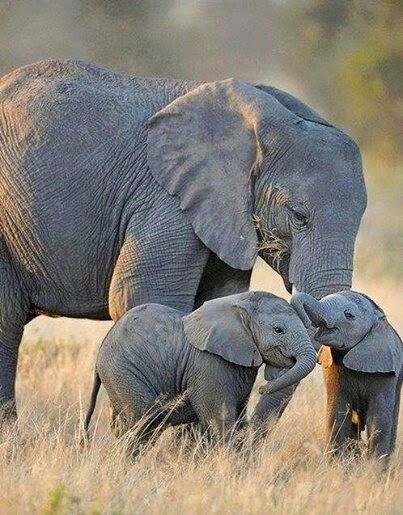This mom had twin baby elephants
