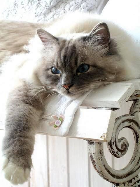 Beautiful beautiful feline