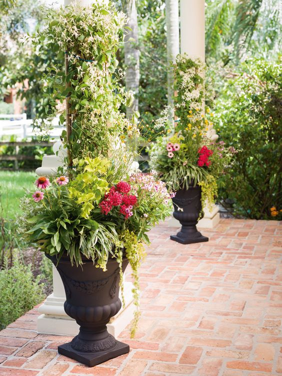 20 container loving plants that thrive in full sun