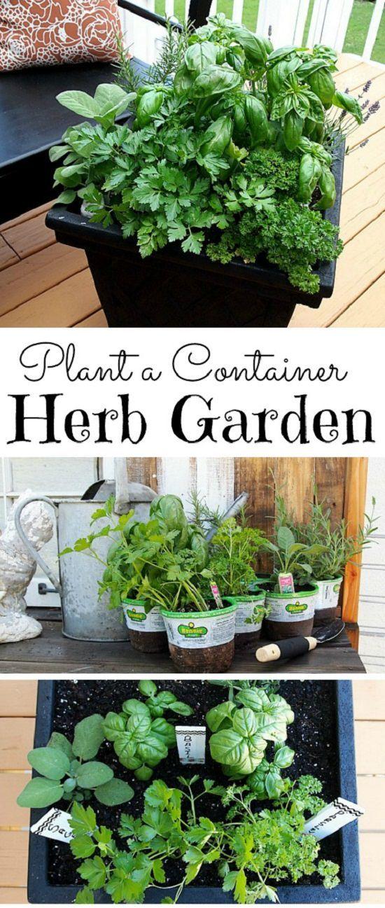 33 Best Container Herb Garden Combinations For Flavor Aroma Container Herb Garden Plants Vertical Herb Garden