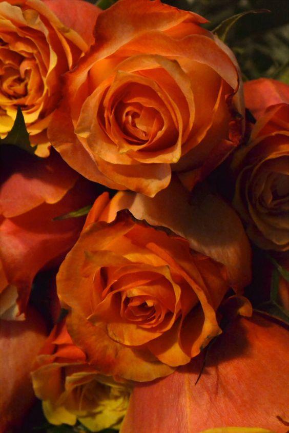 Valentine in Orange