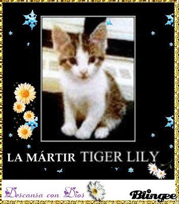 Flores y nieve para el dolor de Tiger Lily