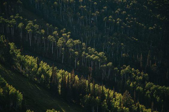 Fondo de Pantalla de Bosque, Árboles, Maleza, Ecosistema, Verde