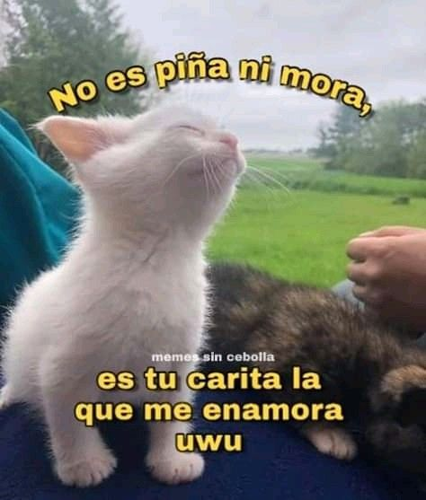 Imagen 5 C Memes Divertidos Memes Romanticos Meme Gato
