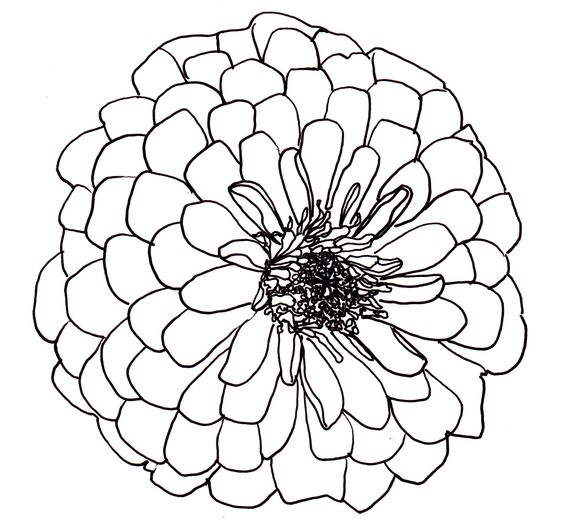 Flower Circle Line Drawing : Line drawing flowers dahlia drawings pinterest dahlias and nature