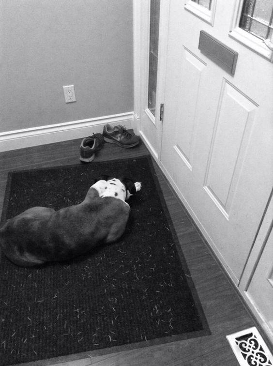 Resultado de imagen para white boxer door waiting