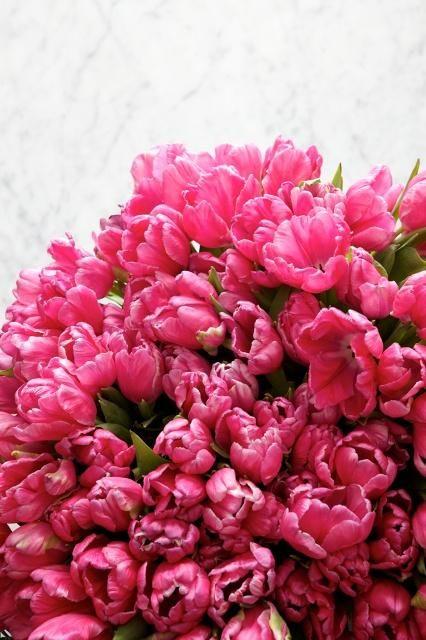 Tulipanes rosa
