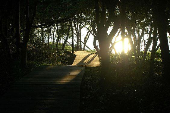 10 Best Hiking Trails on Long Island | Huffington Post NY
