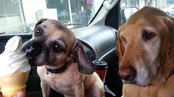 Cooper and Daisy go through the drive up window at McDonald's