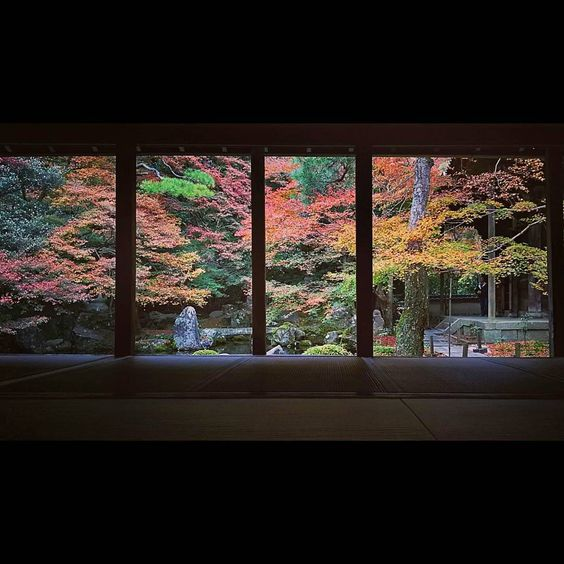 A view of the garden as if through a picture frame. #garden #temple #northside #kyoto #notcoloredred #rakuhokurengeji #洛北へ紅葉🍁狩り #額縁庭園 #真っ赤に紅葉していればなぁ #洛北蓮華寺