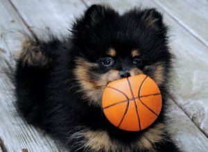 Basketball Pup