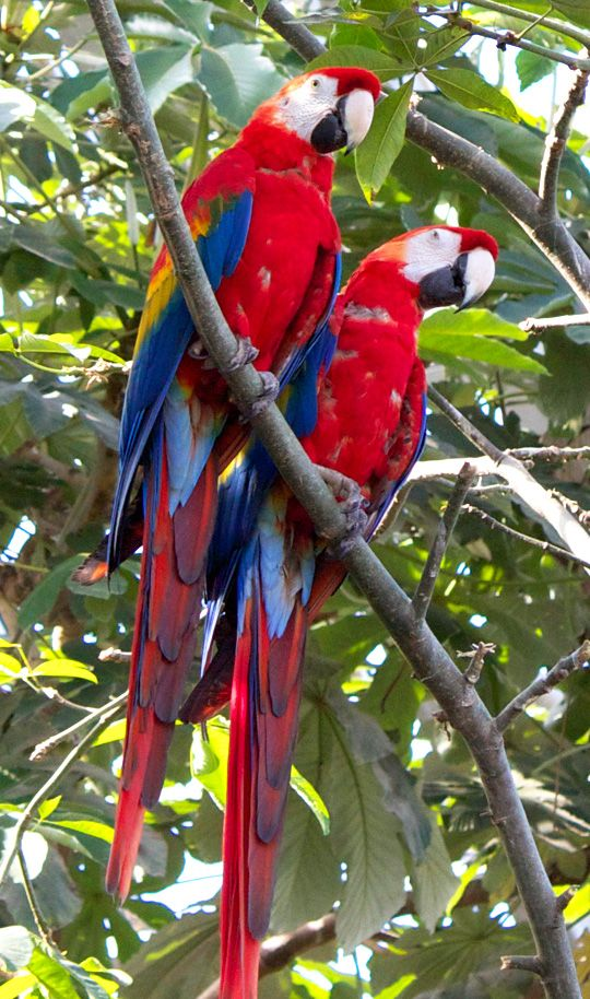 perroquet-zoo-vincennes