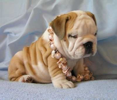 Never thought wrinkles could look so cute.