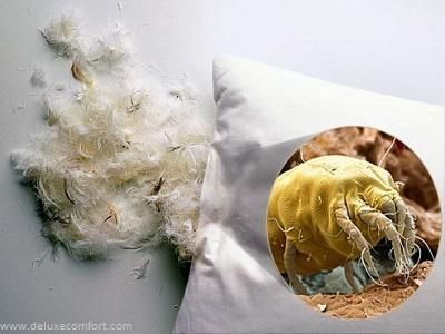 Cleaning Pillows A Must To Avoid Mites Mold And Bacteria