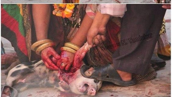 Petition · NEPAL! Stop Barbaric Festivals, Stop religious slaughtering of animals, Stop animal abuse and suffering · Change.org
