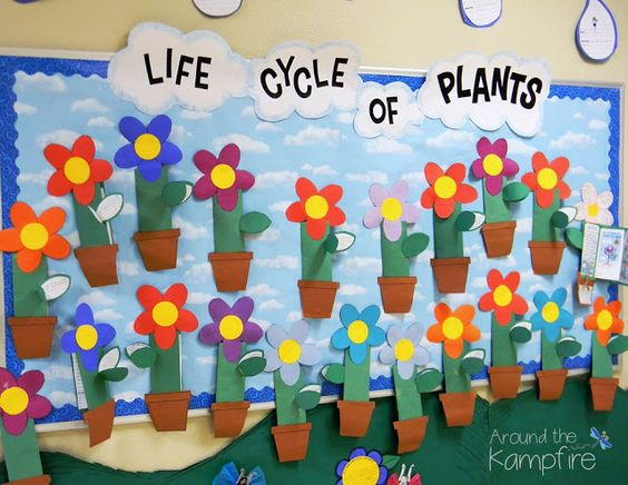 Plant life cycle bulletin board with foldable flower booklets~ Part of a complete unit for teaching and writing about the life cycle of plants