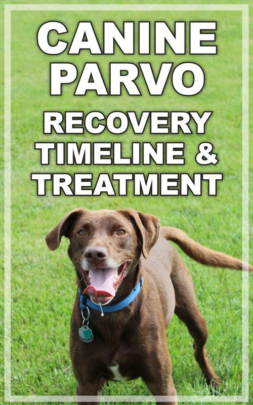 Canine Parvo Recovery Timeline And Treatment Parvo Parvo Treatment Parvo Remedies