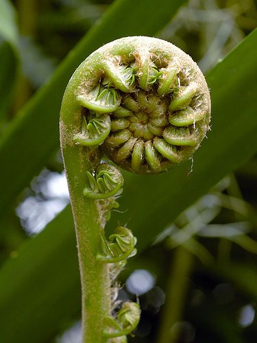Curly fuzz by Eric Hunt., via Flickr