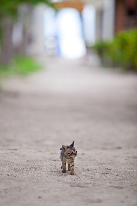 道の真ん中を歩く野良猫の子)