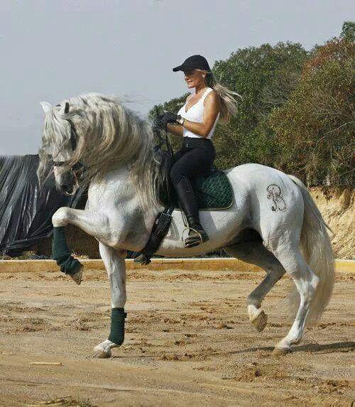 Azteca horse Pura Raza Espanola Yeguada Herrera Caballos Espanoles ...