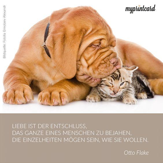 Liebe ist der Entschluss das Ganze eines Menschen zu bejahen, die Einzelheiten mögen sein, wie sie wollen. -Otto Flake  #zitat #quote #liebe #ehe #tiere #hund #katze #liebeszitat #glück