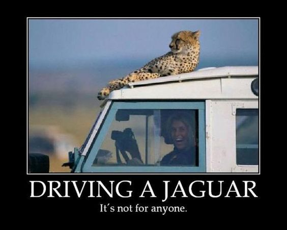 Driving a Jaguar is not for anyone: