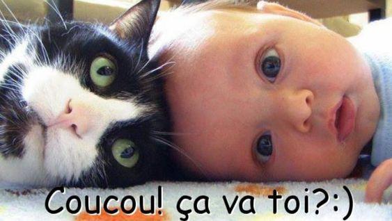 Coucou! ça va toi? :) #coucou chats bebe