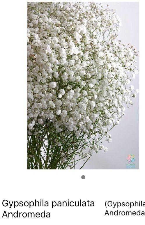 Pin By Louise Barry On Flowers In 2020 Gypsophila Flowers Plants