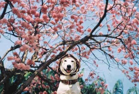 Gluta, the happiest dog on earth who survived the cancer