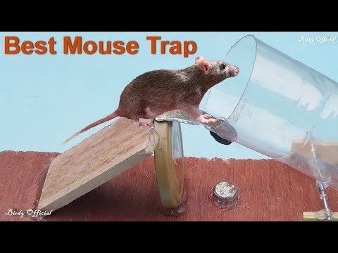 12 Homemade Mouse Traps That Work Great To Catch Mouse And Rates