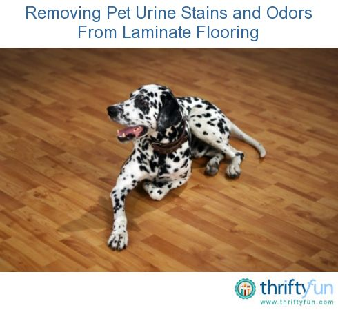 This is a guide about removing pet urine stains and odors from laminate flooring. Because of its composition, removing pet urine stains and odors from laminate flooring may seem daunting.