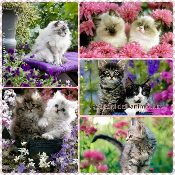 kitty cat collage:
