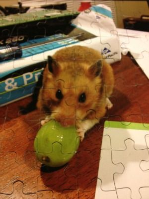 fun hamster puzzle! Isn't this adorable? Great way to turn your favorite pet photo into something fun!
