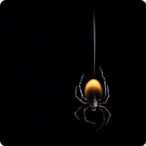 itsy, bitsy spider…