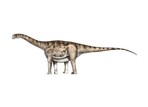 Aragosaurus Moose Art Art