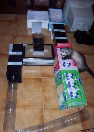 Recorrido laberinto cajas y tubos por Cris de la Comunidad de Hurones