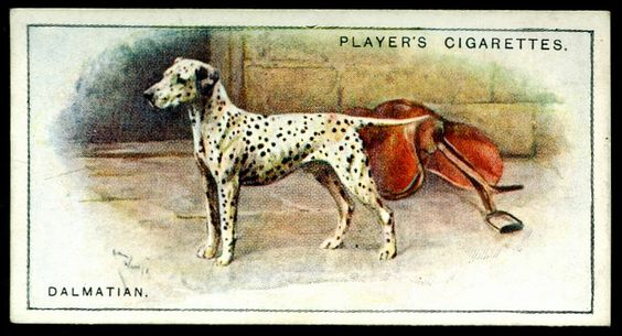 Cigarette Card - Dalmation