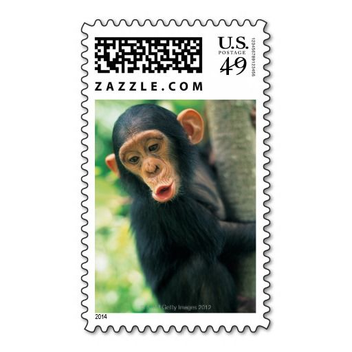 Young Chimpanzee (Pan troglodytes) Stamps in each seller & make purchase online for cheap. Choose the best price and best promotion as you thing Secure Checkout you can trust Buy bestDiscount Deals          	Young Chimpanzee (Pan troglodytes) Stamps please follow the link to see fully...