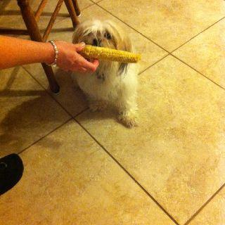 Everyone must like corn on the cob!