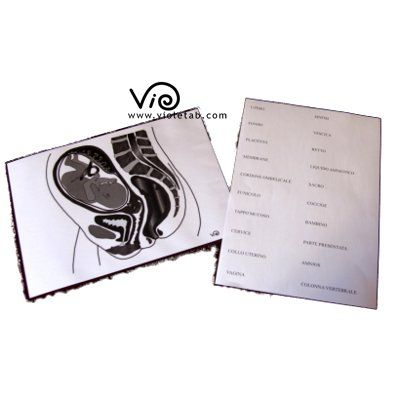 .http://www.violetab.com/negozio/650/gioco-della-valigia-cosa-serve-durante-il-travaglio-e-in-ospedale