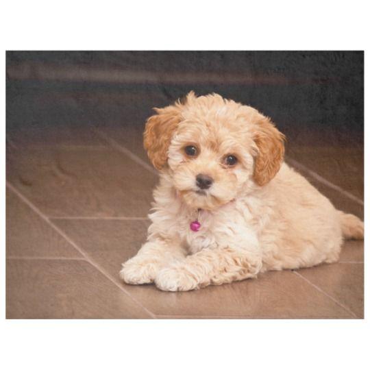 Baby Maltese Poodle Mix Or Maltipoo Puppy Dog Fleece Blanket