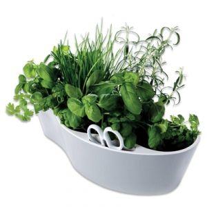 Home-grown veg